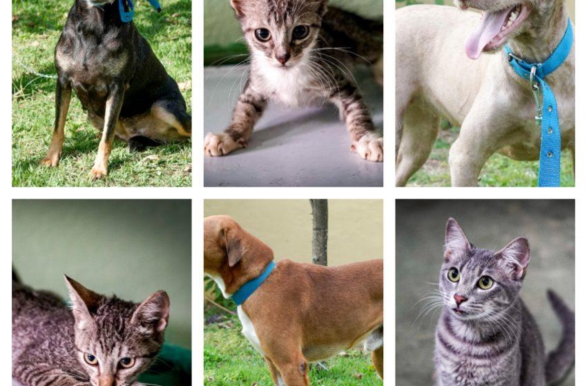 Evento de adoção de animais acontece neste sábado (12) na Pedra da Cebola