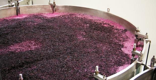 A fermentação dos vinhos