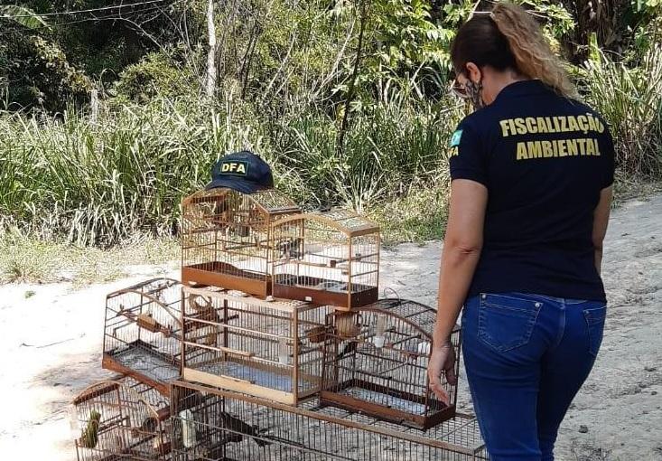 Sete pássaros criados sem autorização são resgatados por fiscais na Serra